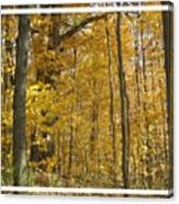 Autumn Out My Window Canvas Print
