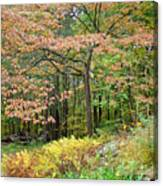 Autumn Paints A Dogwood And Ferns Canvas Print