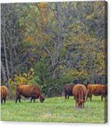 Autumn Pasture Canvas Print