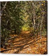 Autumn Path In Spearfish Canyon Canvas Print