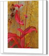 Autumn Penstemon Poster Canvas Print