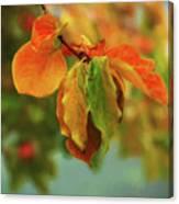 Autumn Persimmon Leaves Canvas Print