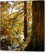 Autumn Perspective Canvas Print