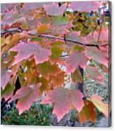 Autumn Pink 2 Canvas Print