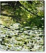Autumn Pond Canvas Print