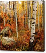 Autumn Quakies Canvas Print