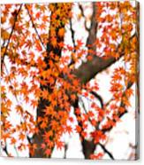 Autumn Red Leaves On A Tree   Canvas Print