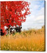 Autumn Red Maple Canvas Print