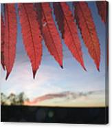 Autumn Red Sumac Leaves Canvas Print