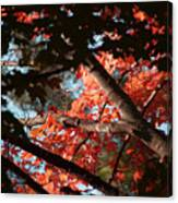 Autumn Red Trees 2015 02 Canvas Print