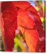 Autumn Reds Canvas Print