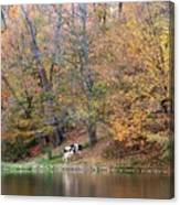 Autumn Reflections Cow Farm Canvas Print