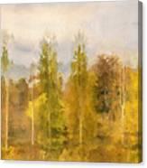 Autumn Shear Poplars Canvas Print
