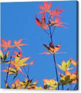 Autumn Skies Canvas Print