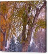 Autumn Snow Park Bench   Canvas Print