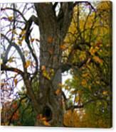 Autumn Spook Canvas Print
