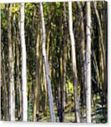 Autumn Stand Canvas Print