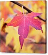 Autumn Still Canvas Print