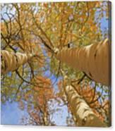 Autumn Straight Up Canvas Print