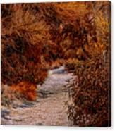 Autumn Stroll No23 Canvas Print