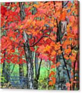 Autumn Sugar Maple Canvas Print