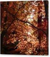 Autumn Sunshine Poster Canvas Print