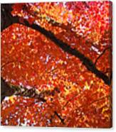 Autumn Tree Art Prints Orange Red Leaves Baslee Troutman Canvas Print