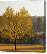 Autumn Tree At Sunset Canvas Print