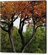 Autumn Tree II Canvas Print