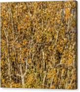 Autumn Tree Tangle Canvas Print