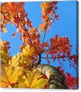 Autumn Trees Artwork Fall Leaves Blue Sky Baslee Troutman Canvas Print
