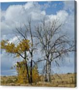 Autumn Trees II Canvas Print