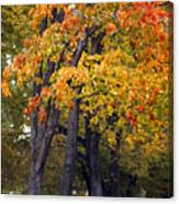 Autumn Trees In Park Canvas Print