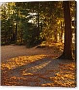 Autumn Trees Near Lake Canvas Print