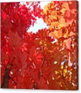 Autumn Trees Red Orange Fall Trees Art Baslee Troutman Canvas Print