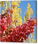 Autumn Trees Red Yellow Fall Tree Blue Sky Landsape Canvas Print