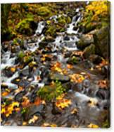 Autumn Tumbles Down Canvas Print