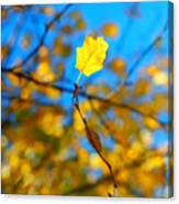 Autumn Twist Canvas Print