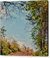 Autumn Up Hill Canvas Print