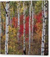 Autumn Warm Canvas Print