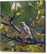 Autumn Waxwing 2 Canvas Print