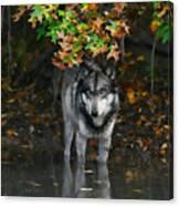 Autumn Wolf Canvas Print