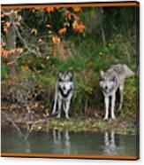 Autumn Wolf Study  Canvas Print