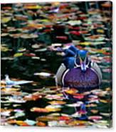 Autumn Wood Duck Canvas Print