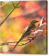 Autumn Yellow Rumped Warbler Canvas Print