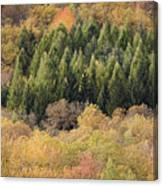 Autumn2 Canvas Print