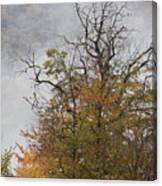 Autumn3 Canvas Print