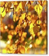 Autumnal Curtain Canvas Print