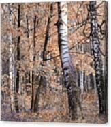 Autumnal Lightness Canvas Print
