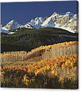 Autumnal View Of Aspen Trees And The Canvas Print